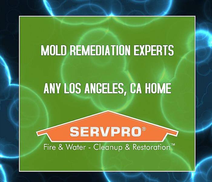 Microscopic bacteria with the SERVPRO promise